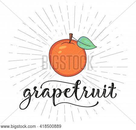 Grapefruit - Fruit Symbol For Farm Market Menu. Healthy Food Design. Vector Stock Illustration