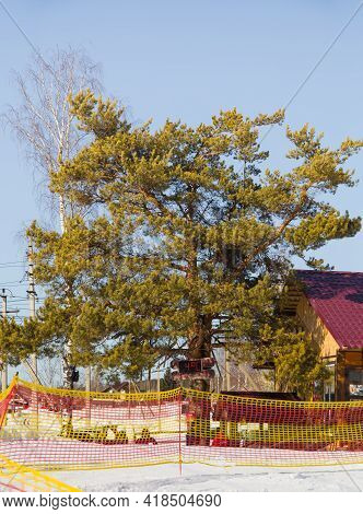 Spruce Tree With An Electronic Clock Showing The Temperature In A Ski Resort. Red-yellow Safety Net