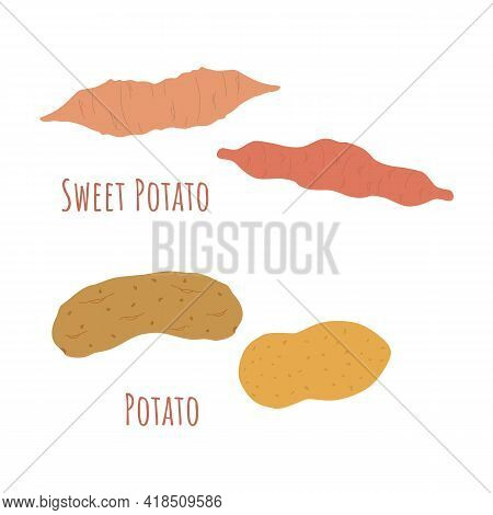 Four Whole Regular And Sweet Potatoes Isolated On White And Made In Flat Style. Symmetrical Shapes F