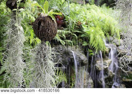 Hanging Flower Plant Pot In Garden, Stock Photo