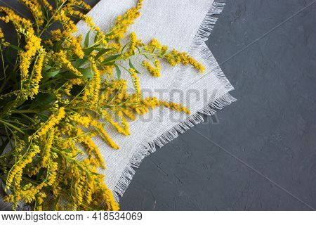 Several Branches Of Canadian Goldenrod (solidago Canadensis) With Delicate Yellow Flowers On A Gray