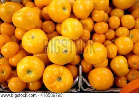 Still Life With Crop Of Many Ripe Yellow Tomatoes Inside Cardon Boxes In The Vegetable Department St