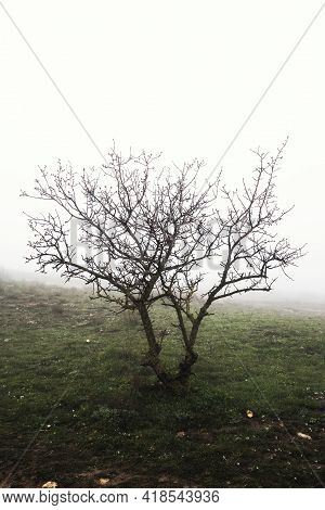 Landscape With Rocks And Fog. Silhouette Of A Tree With Bare Branches In Fog. Mystical Concept.