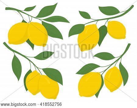 Set Yellow Lemons On A Branch. Lemon Is A Sour Fruit High In Vitamin C. Vector Illustration