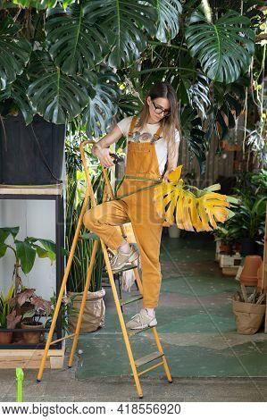 Florist In Home Garden. Woman Entrepreneur, Greenhouse, Decor Or Houseplant Shop Owner, Gardening In