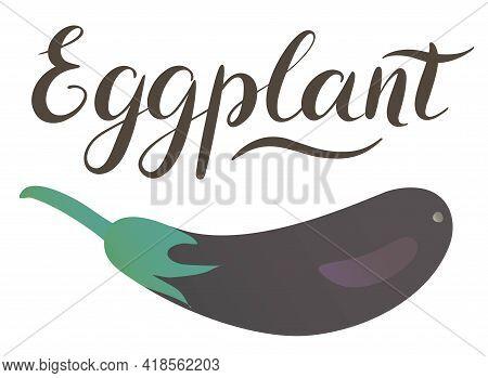 Eggplant Isolated On White Background, Fresh Aubergine. Vector