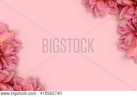 Border Frame Made Of Dahlia Flowers On A Pink Background. Tenderness Romantic Concept.