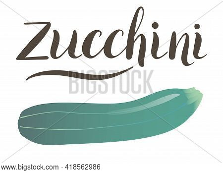 Colorful Zucchini Vector Illustration Isolated On White Background