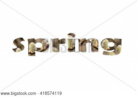 Word Spring Of Pussy Willow Branches With Fluffy Buds On White Background