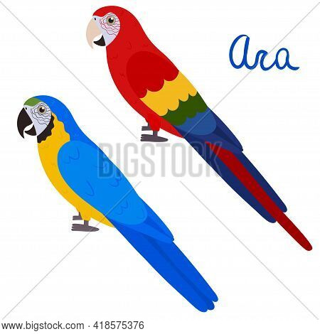 Ara Parrot In Cartoon Style On White Background. Vector Hand Drawn Illustration. Macaw Parakeet.