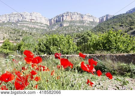 Red Poppies Bloom On Blurred Background Of Rocky Mountains. Abandoned Farmland, Agricultural Crisis