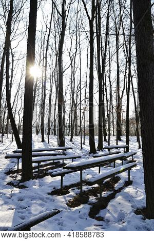 The Benches Among The Trees Are Snowy And The Sun Shines Through The Forest On A Frosty Afternoon