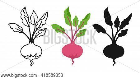 Vegetable Beet Cartoon Set, Line Icon, Black Glyph Style. Beetroot Organic Food. Rural Red Healthy V