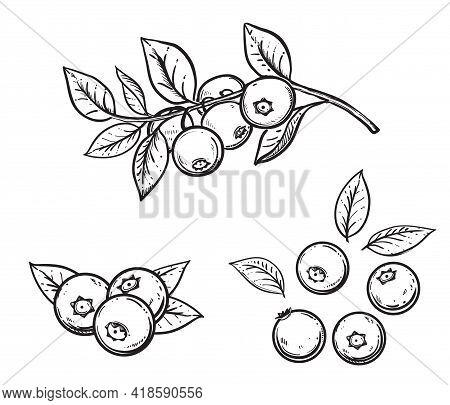 Hand Drawn Sketch Black And White Blueberry Branch, Fruit, Leaf. Vector Illustration. Elements In Gr