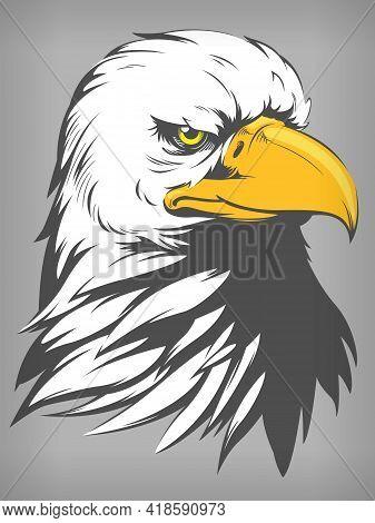 Bald Eagle Falcon Hawk Head Cartoon Vector Illustration Drawing