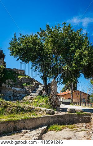 A Beautiful Green Tree Grows In The Ancient Ruined City In The Ruins. View Of The Ancient City In Si