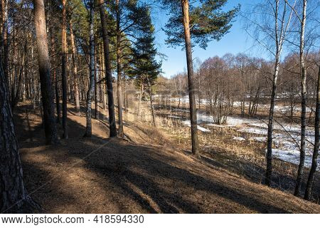 Spring Sunny Day In A Mixed Forest With A Blue Sky, Russia.