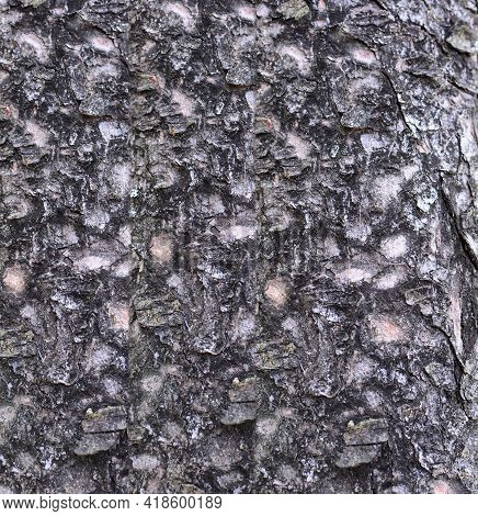 Background Of Tree Bark. Full Frame Tree Bark Natural Texture And Pattern.