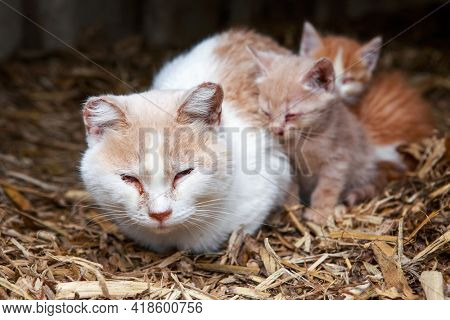 Sick mother barn cat with kittens