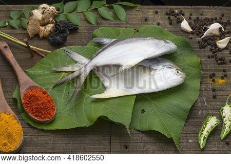 White Pomfrot