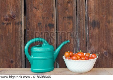 Harvest Red Tomatoes In White Bowl Next Green Watering Can. Gardening Fresh And Juicy Vegetables Fro