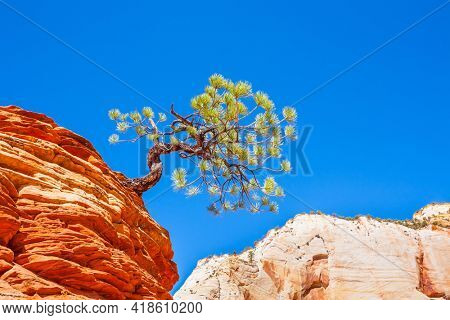 Famous Jumping Tree