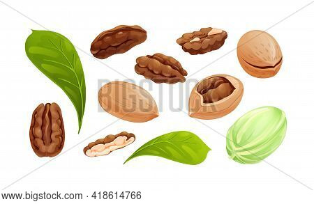 Pecan Nut Set, Different Statements And Rotations