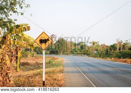 Cattle Crossing Warning Traffic Sign On The Roadside