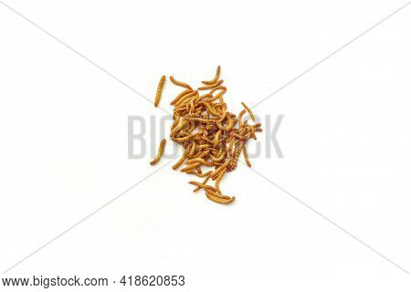 Mealworm Are The Larval Form Of The Beetle Are Currently Cultured As Economic Animals. It Use To Foo