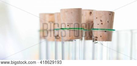 Chemical liquid sample tubes, Test tubes with samples in a scientific laboratory