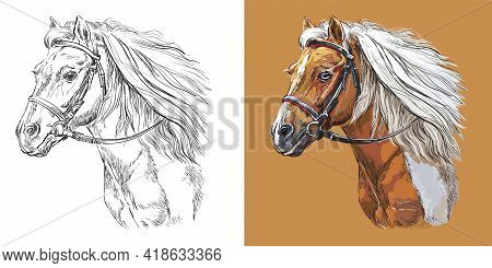 Realistic Head Of Sportive Pinto Pony. Vector Black And White And Colorful Isolated Illustration Of
