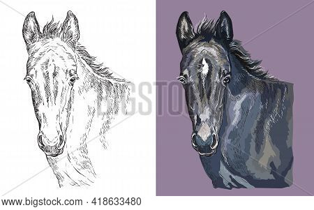 Realistic Head Of Young Black Pony. Vector Black And White And Colorful Isolated Illustration Of Hor