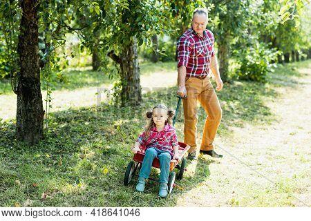 Grandfather With Granddaughter Harvesting Fresh Red Apple On Huge Garden. Harvest Concept. Child Eat