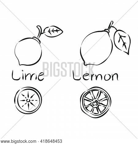 Lemon And Lime Fetus. Citrus Fruit In Hand Draw Style On White Background. Line Art. Sketch Botanica