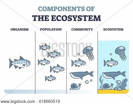 Components Of Environmental Ecosystem With Organism, Population Or Community Outline Diagram. Educat