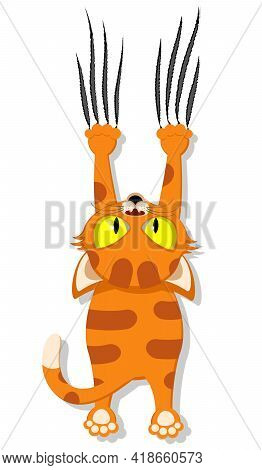 A Ginger Cat Hangs On Its Front Legs And Does Scratches. Pets On A White Background.