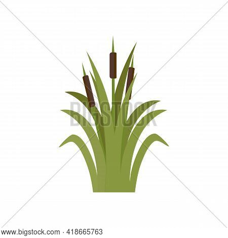 Reeds In Green Grass Isolated On White Background. Green Swamp Bulrushes.   Clip Art For Decorate Sw