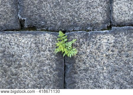 Background Texture Wall Of Castle With Solitary Green Fern Vegetation