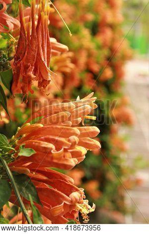Flores Naranjas En Organizadas En Una Pared