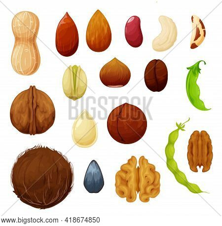Nuts And Beans Natural Food Seeds Vector Icons Of Cashew And Almond, Peanut And Pistachio. Vegetaria