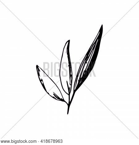 Olives Leaves For Italian Cuisine Design Or Extra Virgin Oil Food Or Cosmetic Product Packaging Wrap