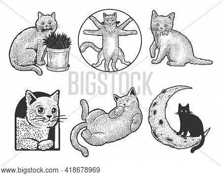 Cat Set Sketch Engraving Vector Illustration. T-shirt Apparel Print Design. Scratch Board Imitation.