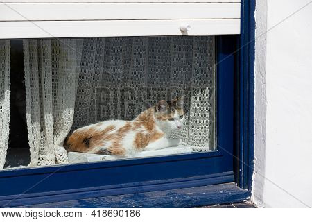 Young Three Colored Cat Looking Trough The Window Outside. White House And Blue Windows. Cute Cat Ob