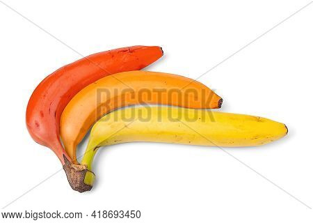 Banana Isolated On White Background. Ripe Multi-colored Bananas. Bouquet Of Yellow, Red And Orange B