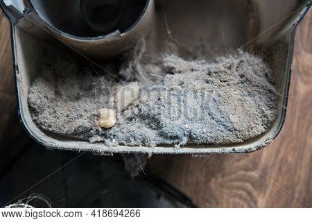 Dust Container In A Vacuum Cleaner With A Lot Of Dust. Dust Is The Cause Of Allergies And Feeling Un