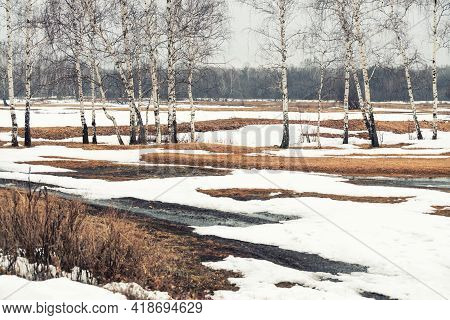 Forest With Birch And Melting Snow In Early Spring. Beautiful Spring Landscape. South Ural, Russia