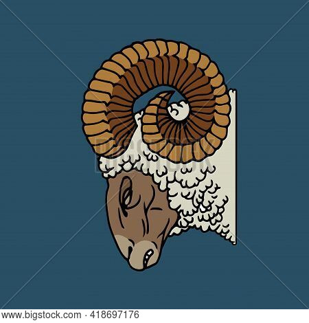 Angry Ram Head With Horns And White Wool, Farm Animal, Hunting Trophy, Color Vector Illustration Wit
