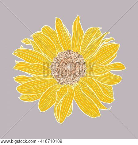 Single Sunflower Head Digital Drawing, Yellow And Terracotta With White Outline On Gray. Floral Vect