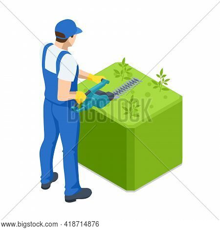 Agricultural Work. Isometric Gardener Work On Shrub, Remove Excess Leave. Male Handyman Character Cu
