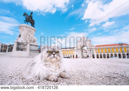 Cat On Vacation. Beautiful Fluffy Persian Cat Tourist Exploring Lisbon City. Travel With Pets Concep